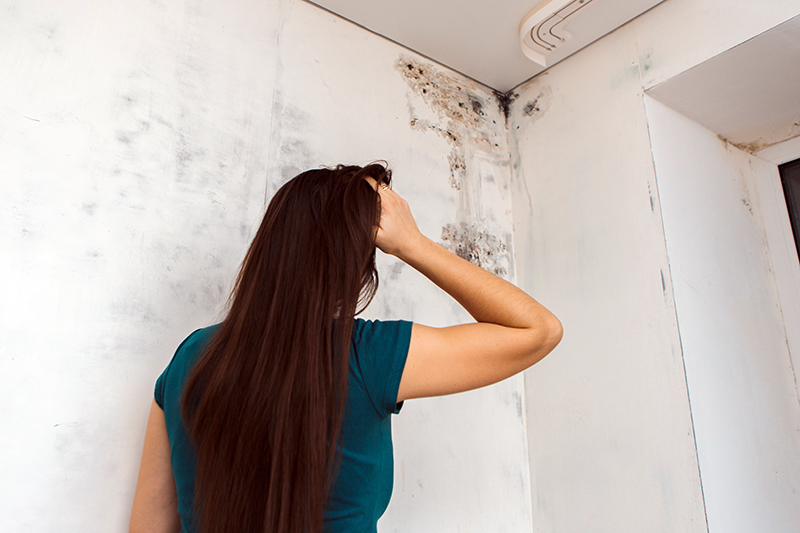 Toxic Mold Exposure: Know Your Legal Rights